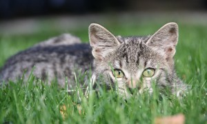 cat-1241839_1920