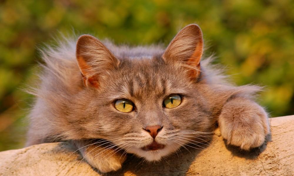 cat-401124_1920