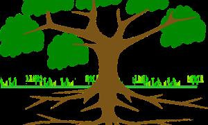 tree-309046_1280